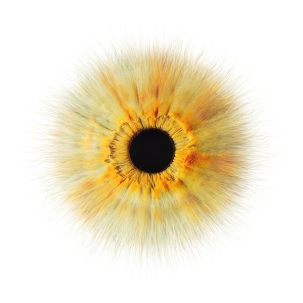 绝对眼神-Sundermann