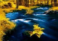 Photoshop调出绿色风景照片变成梦幻金色调