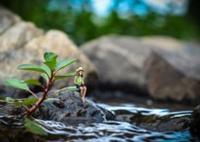 營造微縮效果,PS合成坐在葉子上釣魚的小姑娘