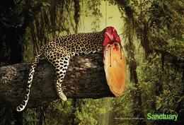 """Sanctuary保護動物公益廣告:""""當樹木殆盡,動物也是"""""""