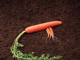 卡爾加里農貿市場宣傳創意廣告欣賞(二)