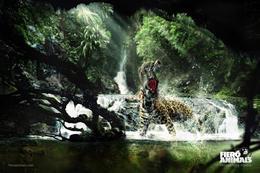 FIERO ANIMAIS系列精彩广告创意欣赏