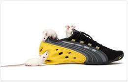 彪馬PUMA運動鞋自然主題創意廣告