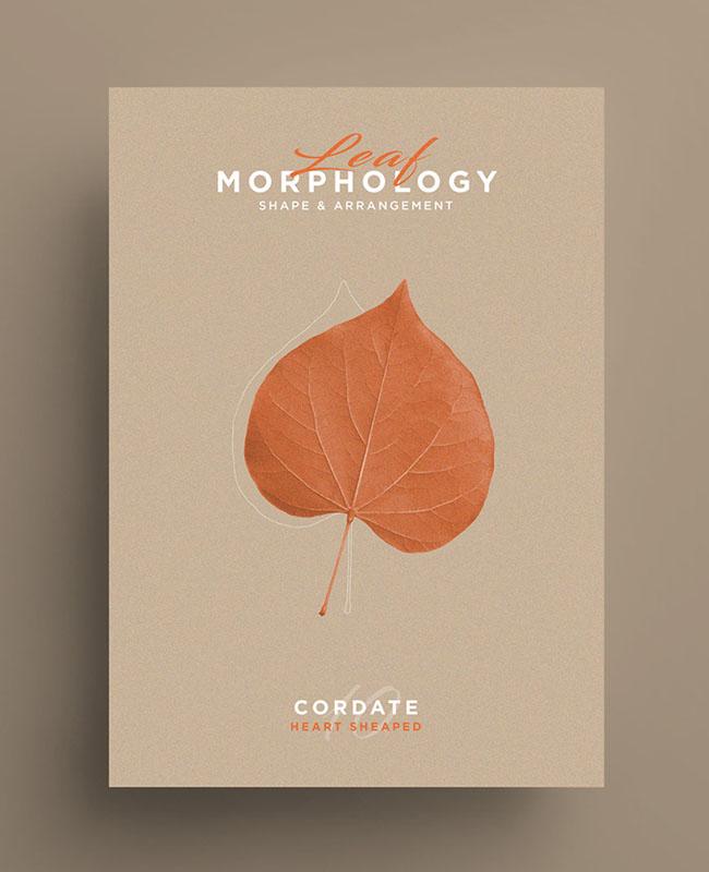 Leaf Morphology系列树叶海报设计欣赏