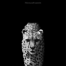 动物黑白摄影欣赏