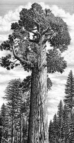 Halbert-西部版畫風格植物農作物果實