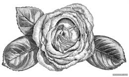 花卉水果植物版畫-Trikoz