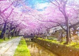 Photoshop調出公園櫻花照片唯美仙境效果