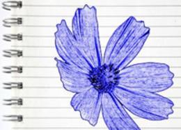 Photoshop制作藍色圓珠筆手繪花朵照片