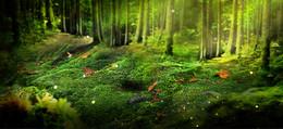 梦幻树林背景