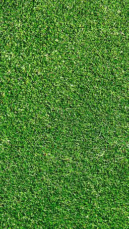 绿草地H5背景