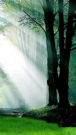 森林晨光H5背景