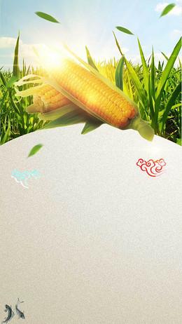 玉米农业农产品蔬菜H5背景素材