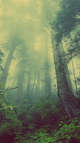 夢幻森林背景