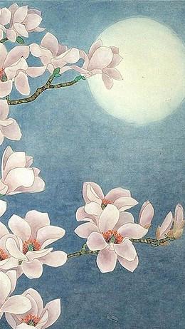 白玉蘭和明月