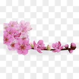 粉色樱花感恩卡素材