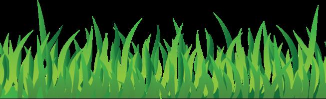绿草PNG