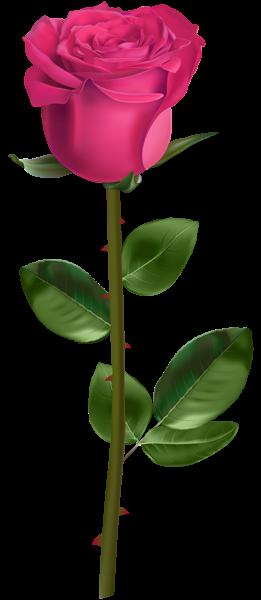 玫瑰玫瑰花透明背景,來自愛設計http://www.ktyijx.tw