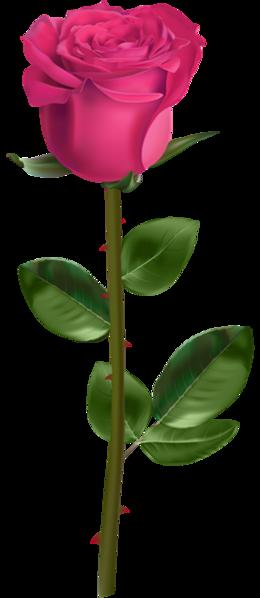 玫瑰玫瑰花透明背景