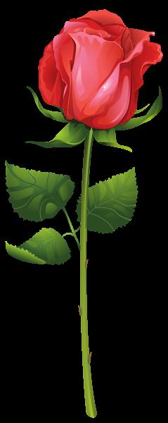 玫瑰玫瑰花透明背景,来自爱设计http://www.oqleg.club