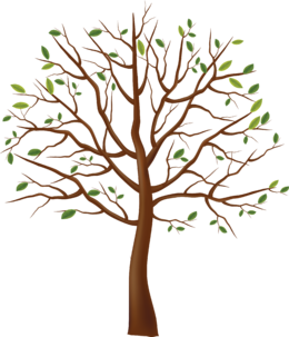 树PNG透明背景图片