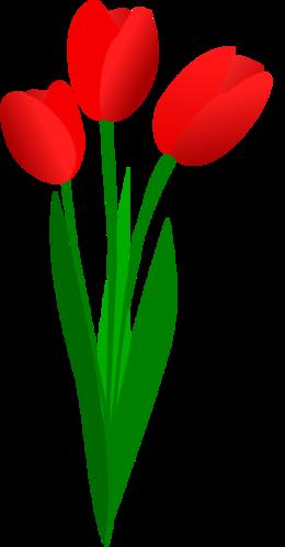 郁金香PNG图像