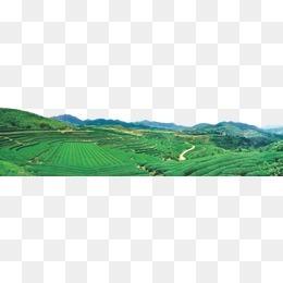 山,绿山,茶山