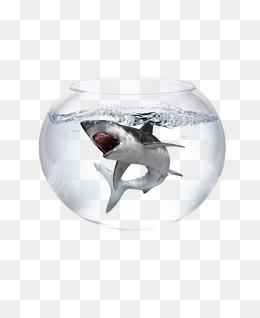 困在鱼缸里的鲨鱼