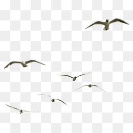 蟲鳥素材手繪蟲鳥元素  飛翔的