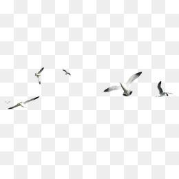 森林動物圖片 飛翔的海鷗