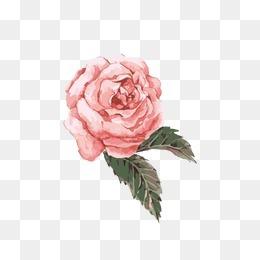 手绘粉色水彩花