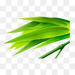 唯美清新竹子嫩竹竹叶水滴