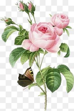 鲜花图片花束图片  精美粉色玫