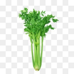 蔬菜图片素描 芹菜
